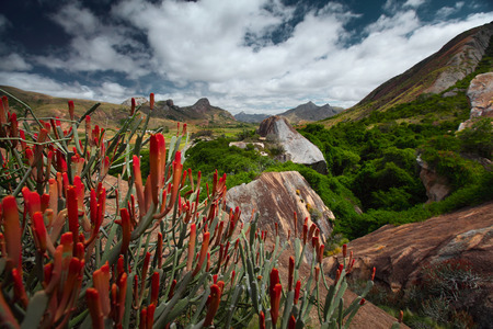 Red flowers and rocky land of Madagascar