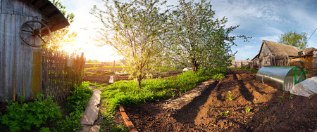 equirectangular: Panorama of a spring blooming garden in a village at sunset. Equiregtangular projection