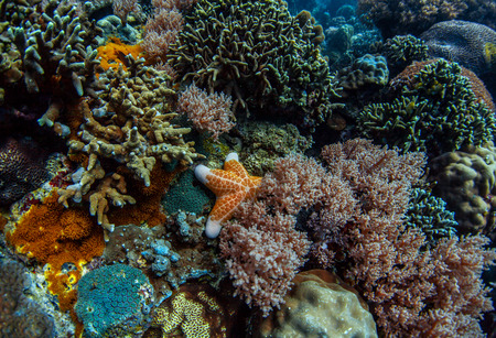 apo: Coral reef in a tropical sea