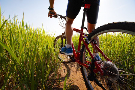 off road biking: Young rider cycling through a green lush meadow in sunny day