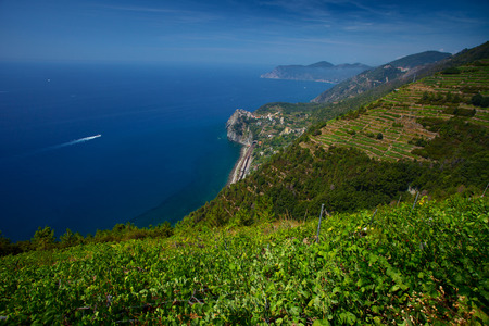 wineyard: Cinque Terre National Park, View to Corniglia town from mountain at sunny day. Italy