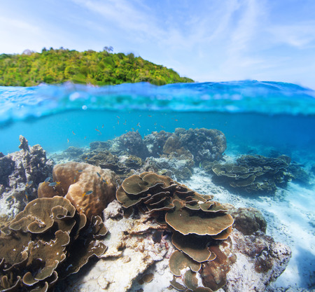 split level: Split level shot of coral reef underwater and green island on the surface