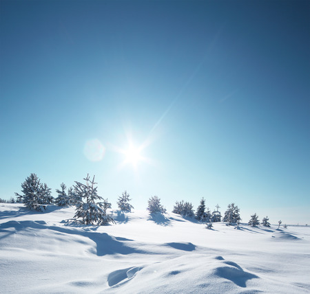 Winter snowy field with pine trees at sunny day