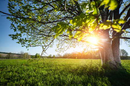 Spring tree on the green lush meadow at sunny day Stock Photo