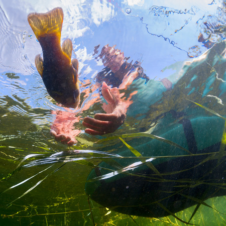 clawing: Underwater shot of the fisherman catching the fish