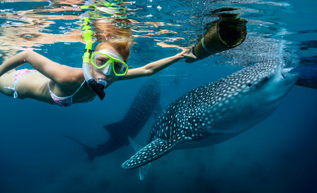 Underwater shot of the young lady snorkeling with whale sharks 免版税图像