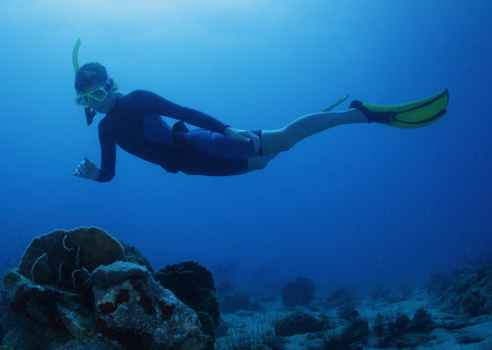 free diver: Free diver on the depth over coral reef