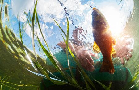 lure: Underwater shot of the fisherman catching the fish