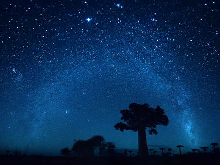 Starry sky and baobab trees. Blurred sky, focus on the tree photo