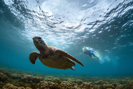 beneath the surface: Underwater shot of the snorkeler watching sea turtle. Focus on the snorkeler. Stock Photo