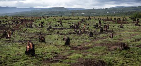 森林伐採や焼き畑の種のマダガスカルの農業による谷の切り株 写真素材
