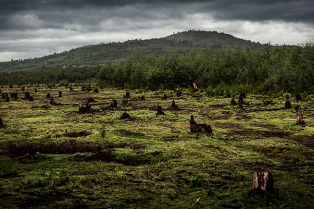emptiness: Stumps on the valley caused by deforestation and slash and burn type of agriculture of Madagascar