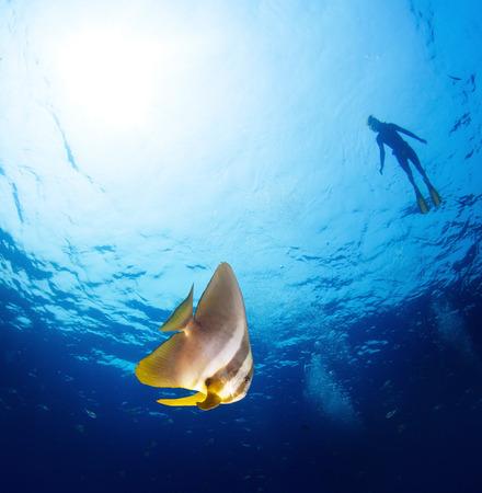 bottomless: Sea