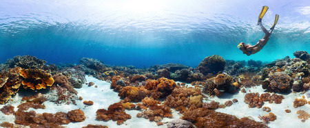 gliding: Underwater panorama of the young lady snorkeling over vivid coral reef in tropical sea. Bali Barat National Park, Indonesia Stock Photo