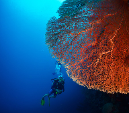 bottomless: Diver in the depth near the huge red coral. Stock Photo
