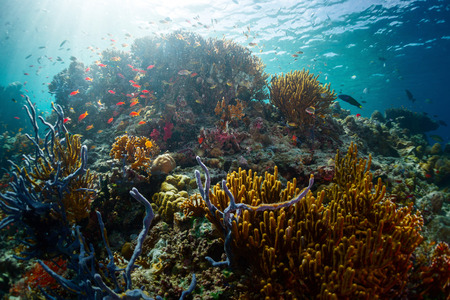 Coral reef in the tropical sea. Indonesia