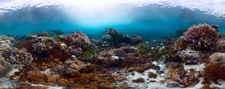 equirectangular: Underwater panorama of the vivid coral reef in tropical sea. Bali Barat National Park, Indonesia