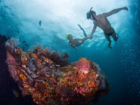 free diving: Couple snorkeling over vivid coral reef