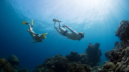 free diving: Underwater shot of the couple gliding in depth of tropical sea at sunny day