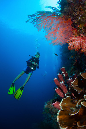 Diver in the depth watching coral reef wall. Bali, Indonesia