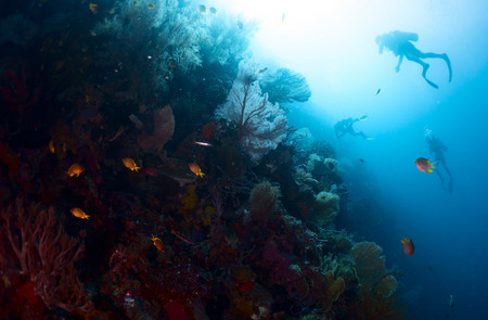 bottomless: Scuba divers exploring underwater reef wall Stock Photo