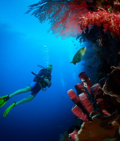 bottomless: Scuba diver exploring tropical reef wall on the depth