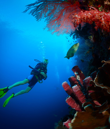 Scuba diver exploring tropical reef wall on the depth