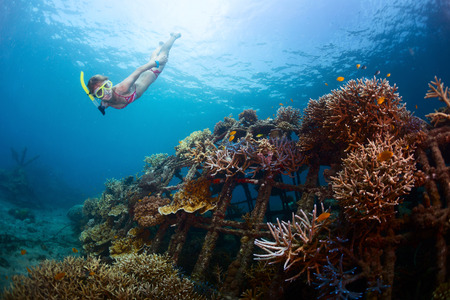 metal structure: Young lady gliding underwater near metal structure with planted corals in Biorock restoration area in the village of Pemuteran. Bali island