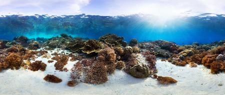 hard coral: Underwater panorama of the vivid coral reef in tropical sea. Bali Barat National Park, Indonesia