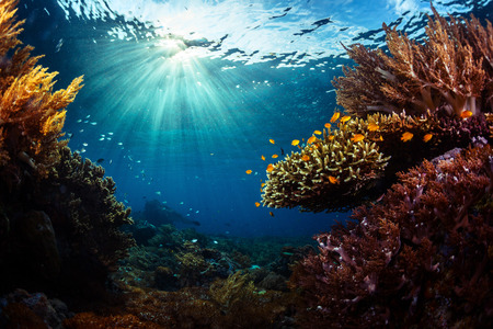 열 대 바다에서 생생한 산호초의 수중 촬영. 발리 바랏 국립 공원, 인도네시아