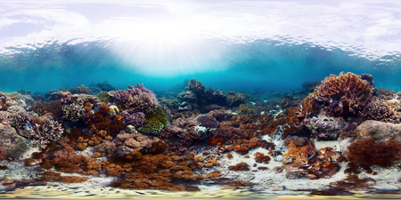 Sperical, 360 degrees seamless underwater panorama of the vivid coral reef. Bali Barat National Park, Indonesia