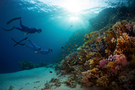 Two free divers exploring coral reef wall with vivid marine life in the Red Sea. Egypt photo