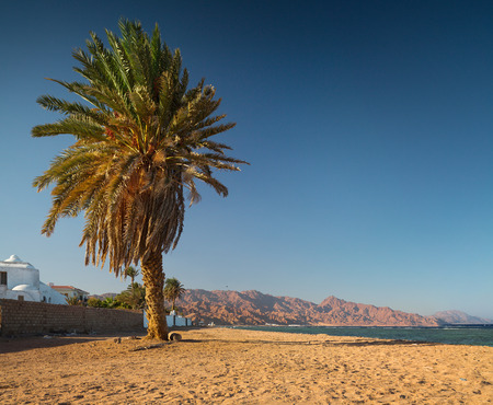 dahab: Palm tree on sandy beach in the town of Dahab, Egypt Stock Photo