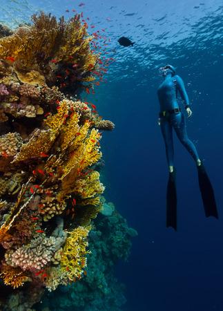 freediving: Freediver Stock Photo