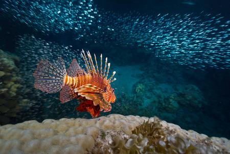 Red Sea photo
