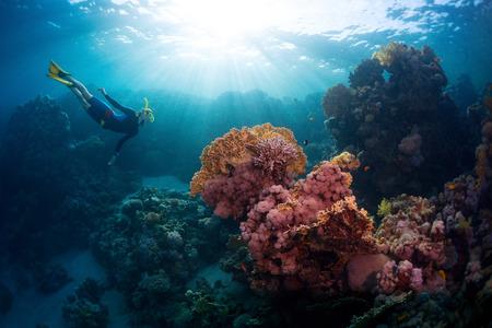 corales marinos: Buceador gratuito explorar los arrecifes de coral vivo en el mar tropical