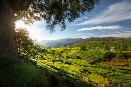 Sri Lanka landscape Reklamní fotografie
