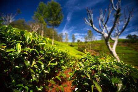 agriculture sri lanka: Sri Lanka