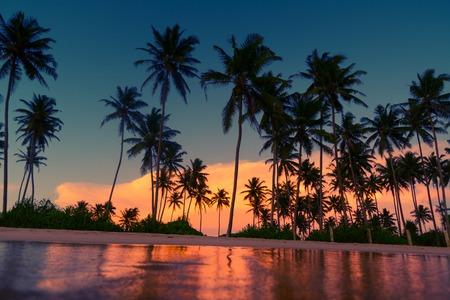 palmier: Plage avec des arbres