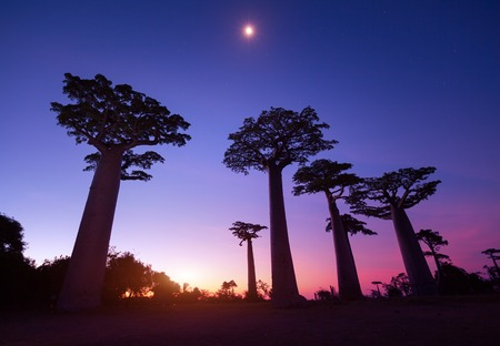 madagascar: Madagascar