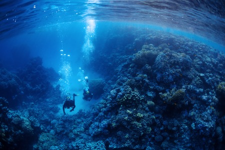 sea  scuba diving: Underwater shot of two divers exploring underwater canyon. Red Sea, Egypt