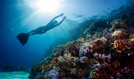 free diving: Lady freediver gliding underwater over vivid coral reef Stock Photo