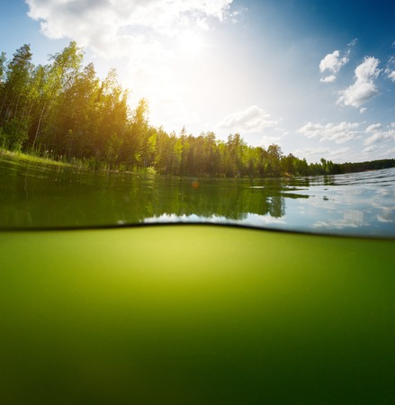 bottomless: Split shot of the freshwater pond with forest above the surface and glare blank background underwater