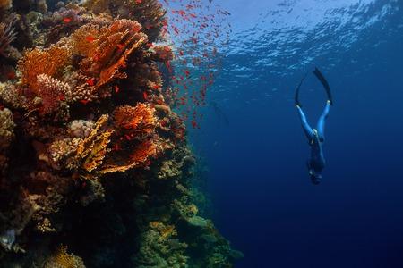 鮮やかなサンゴ礁の壁に沿って降順フリーダイバー。紅海、エジプト