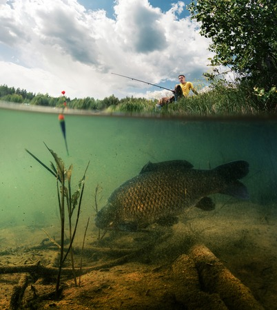 float: Split shot of the freshwater pond with fisherman above the surface and big fish (Carp of the family of Cyprinidae) grazing underwater over the bottom.