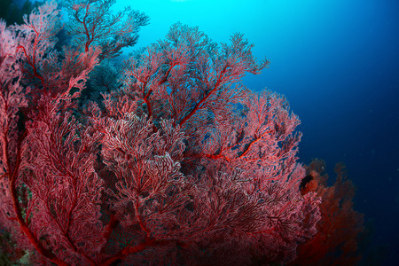 bottomless: Corals in a tropical sea
