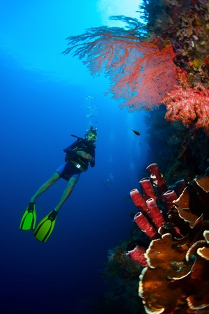 indonesia: Lady diver exploring tropical bright reef with big red corals on the foreground