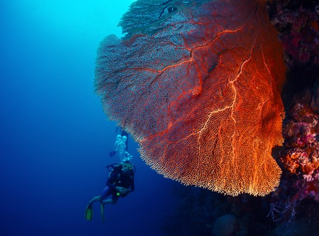 Lady diver exploring tropical bright reef with big hard coral on foreground