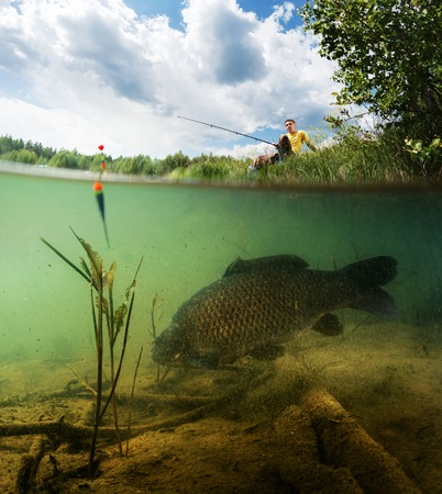 cyprinidae: Split shot of the freshwater pond with fisherman above the surface and big fish (Carp of the family of Cyprinidae) grazing underwater over the bottom.