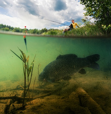 pond: Split shot of the freshwater pond with fisherman above the surface and big fish (Carp of the family of Cyprinidae) grazing underwater over the bottom.